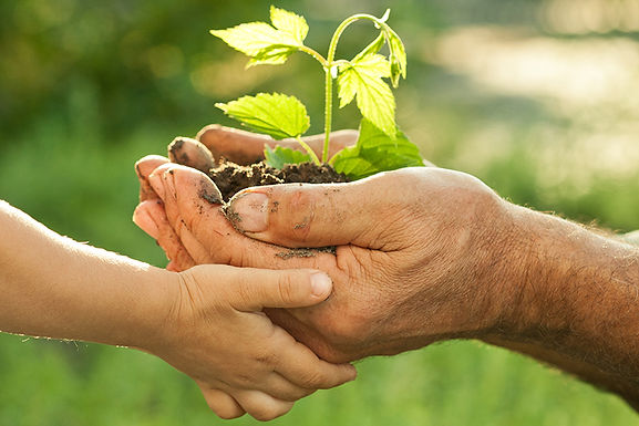 hands holding tree sprout, changing your HVAC filter, how often should I replace HVAC filter, how often should I replace home air filter, maintain home air quality, HVAC filter maintenance