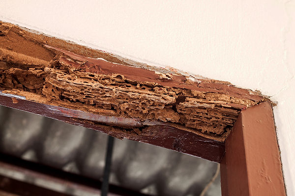 Health Issues Caused By Pipe Leaks Termites