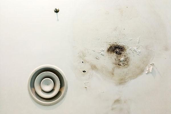 Help My Ceiling Leaks mold