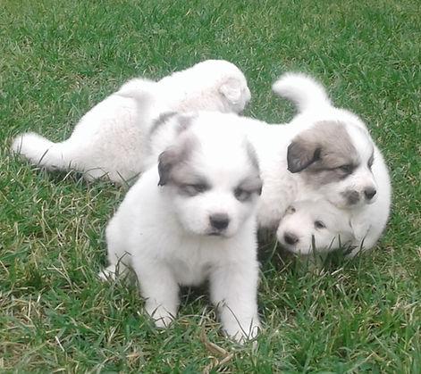 ayden's puppies 15.jpg