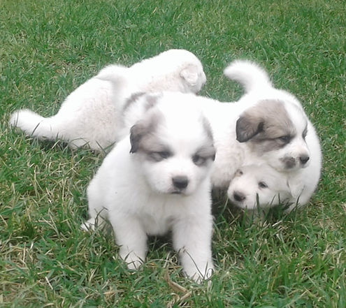 ayden's puppies 15.jpg