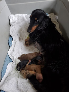 Gretel and puppies.jpg