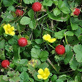 mockstrawberry.jpg