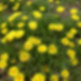treasureflower.jpg