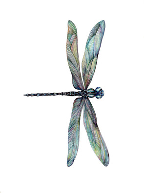 Dragonfly_lowres.jpg