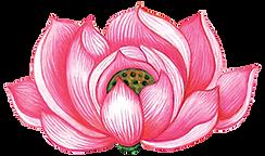 Lotus Flower_MeganCampbell