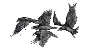 Murder of Ravens