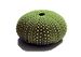 Kina Shell no background.png