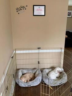 Canine Corner