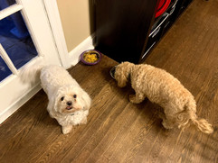 A visit from Milo & Bella
