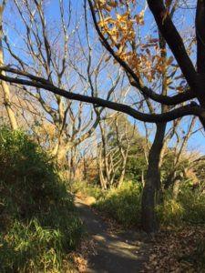 森の散策で、右脳・左脳のバランスを整え自然な心体を取り戻した感じ!