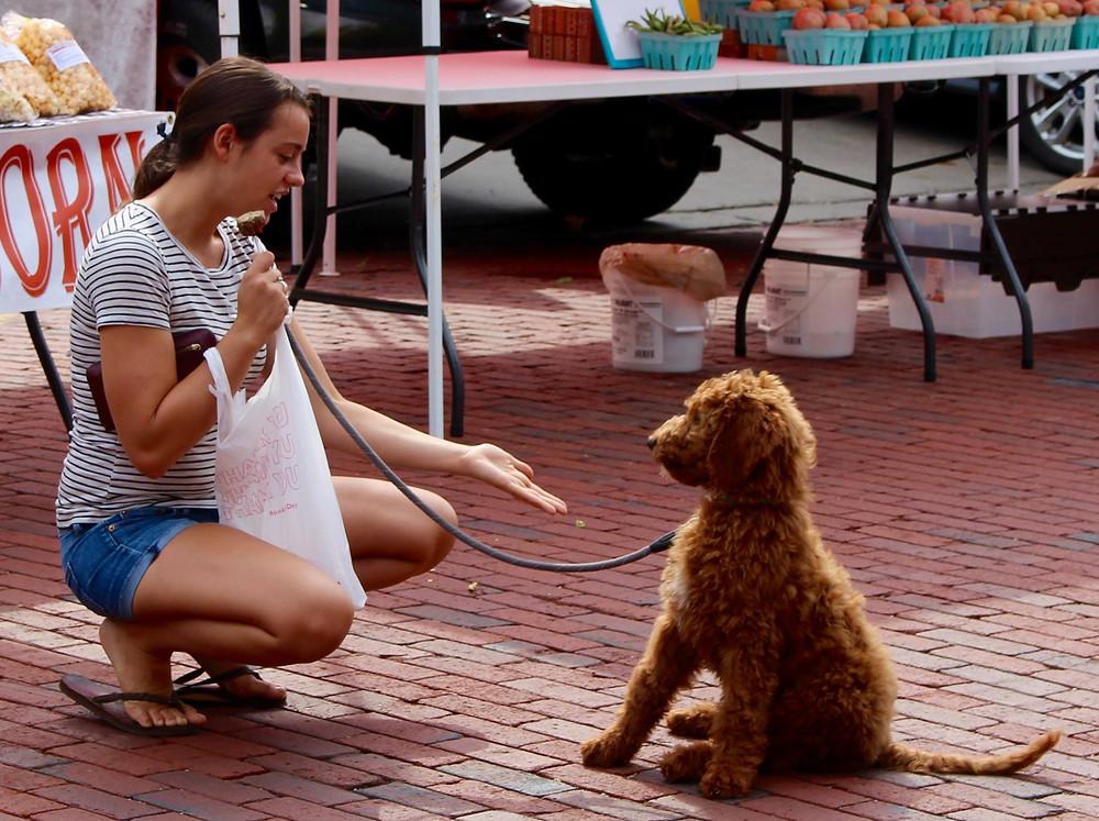 GoldenLife Dog Food