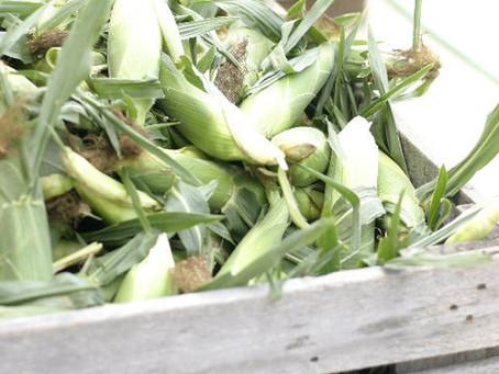 Worthington Farmers Market: July 9th