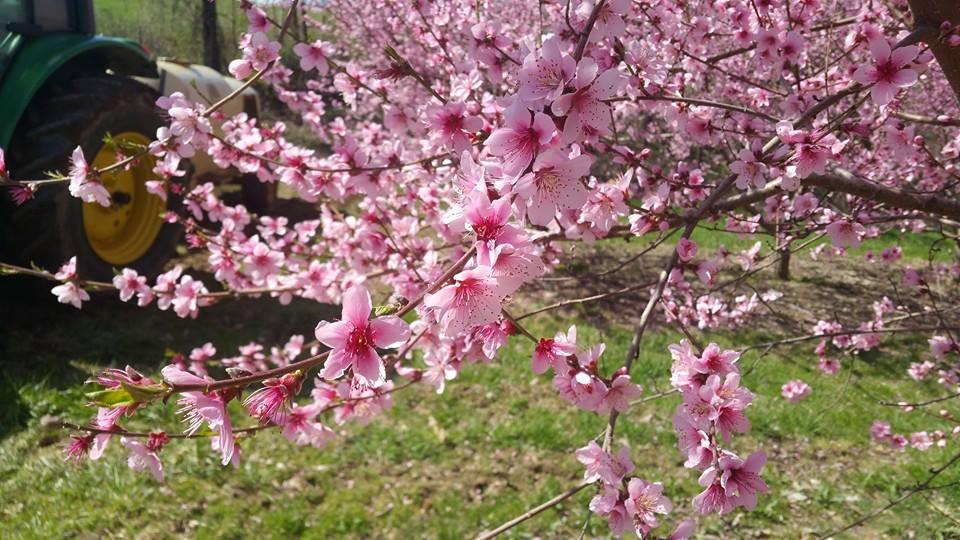 Gillogly Orchard