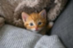 cat, kitten, ginger kitten,wedding photographer, bournemouth wedding photographer, jhgphotography