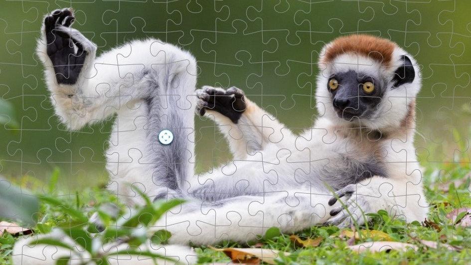 Puzzle Sifaka