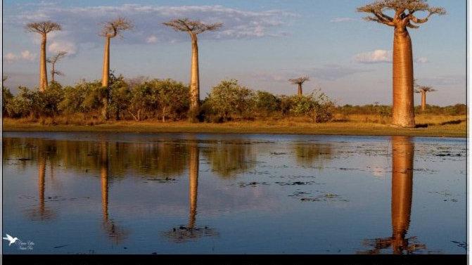 """Calendrier A3 """"Madagascar 2021"""""""