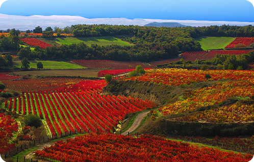 Rioja-in-Autumn.png