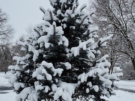 I sure love snow