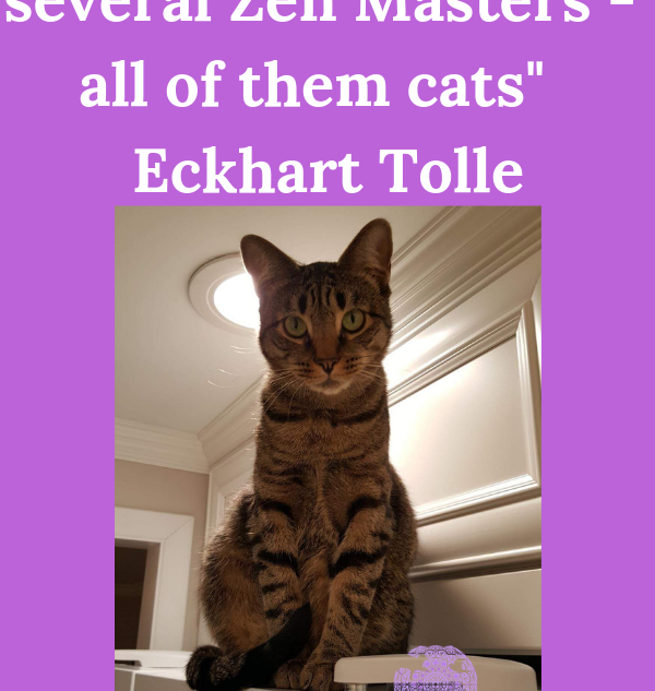 I have lived with several Zen Masters - all of them cats  Eckhart Tolle