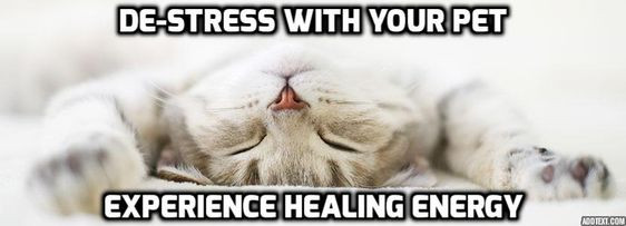 de-stress with the help of your animal