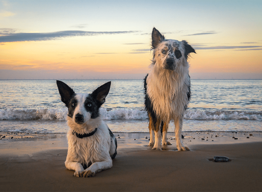 Welcome to Serenity Reiki for Animals Blog