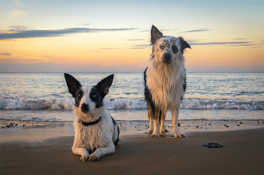 learn how to connect with your animals through reiki meditation