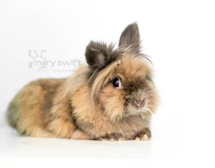 Liberty the Rabbit loves Reiki!