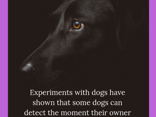 Did You Know Experiements with Dogs...