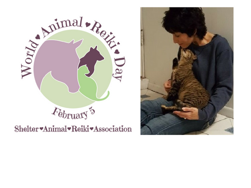 Self Care Healing for Caretakers Class for Baltimore Humane Society