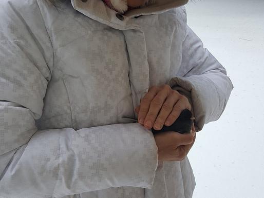 Reiki for a Snow Bird