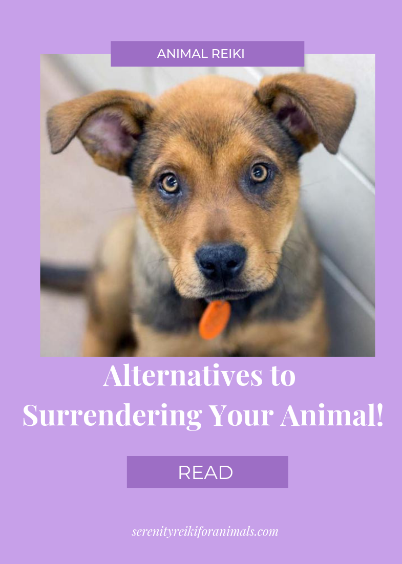 Stop and read this before surrendering your pet