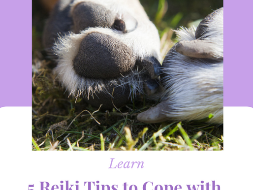 Pet Grief: 5 Reiki Tips to Cope with Your Pain