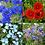Kabloom Wildflower Seedbom