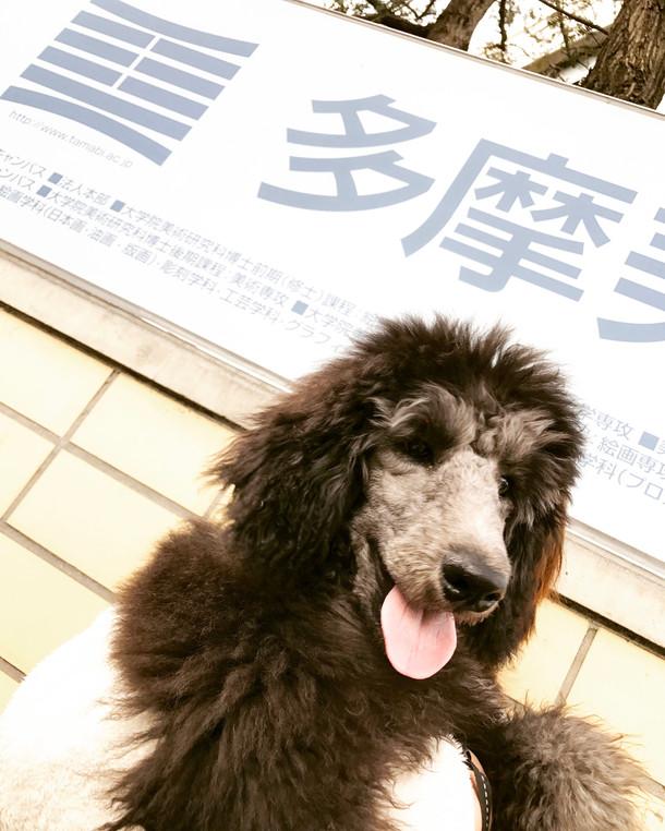 セタビの看板犬