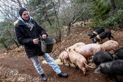 Elevage de porcs Bio. Les Cochons de la Cote d'Azur (8).jpg