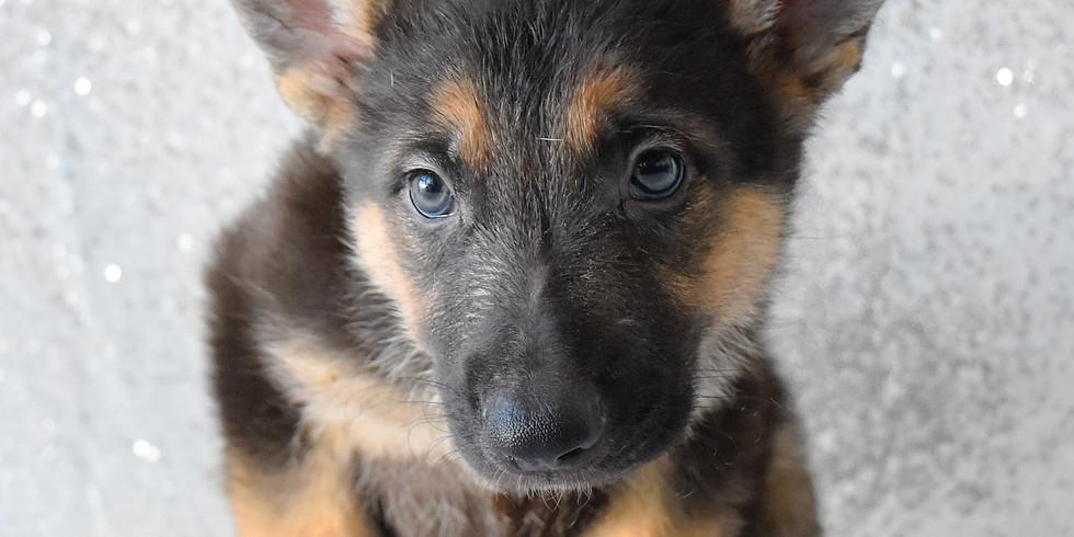 Adopt Your New Best Friend!