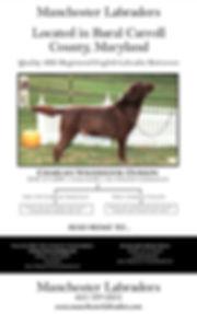 0 Manchester Labradors 4.5x7.jpg.opt688x