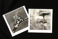 Black & White Nature Photography