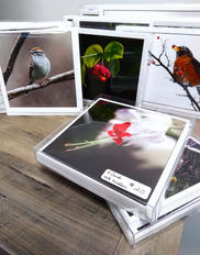Photography Holiday Greeting Cards
