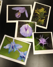 Photography Artist Notecards