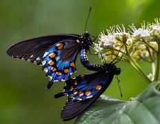 Nature Photography Art