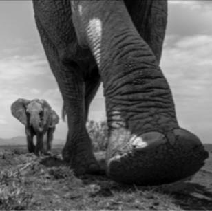 wildlife & my life: photography by box leangsuksun