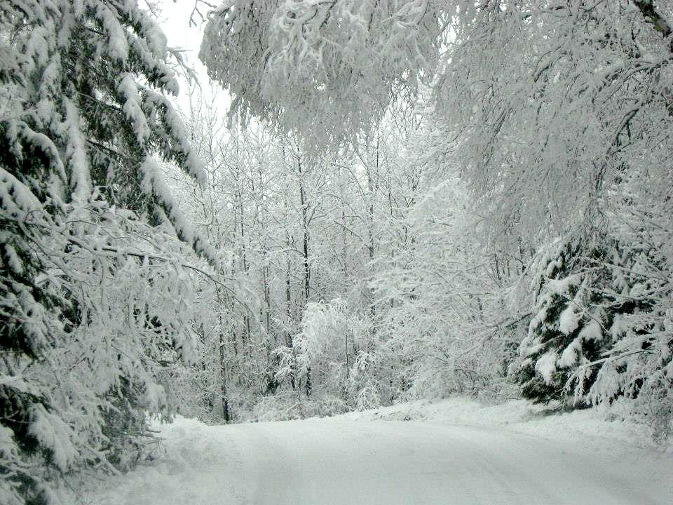Our Winter Wonderland