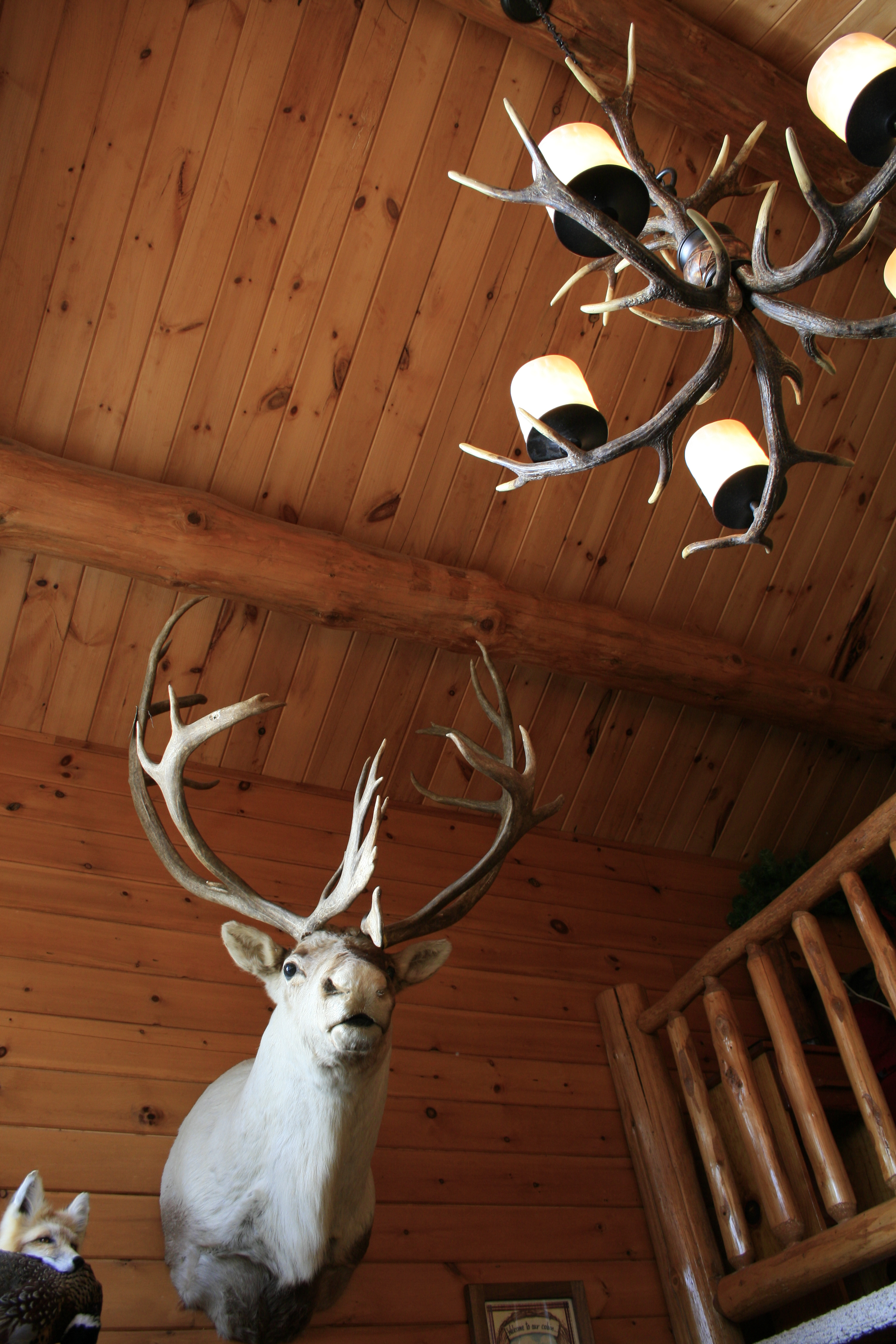 Cathedral Ceilings in Chalet