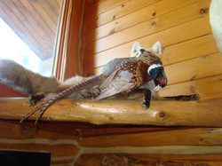 One of the Mounts in Chalet