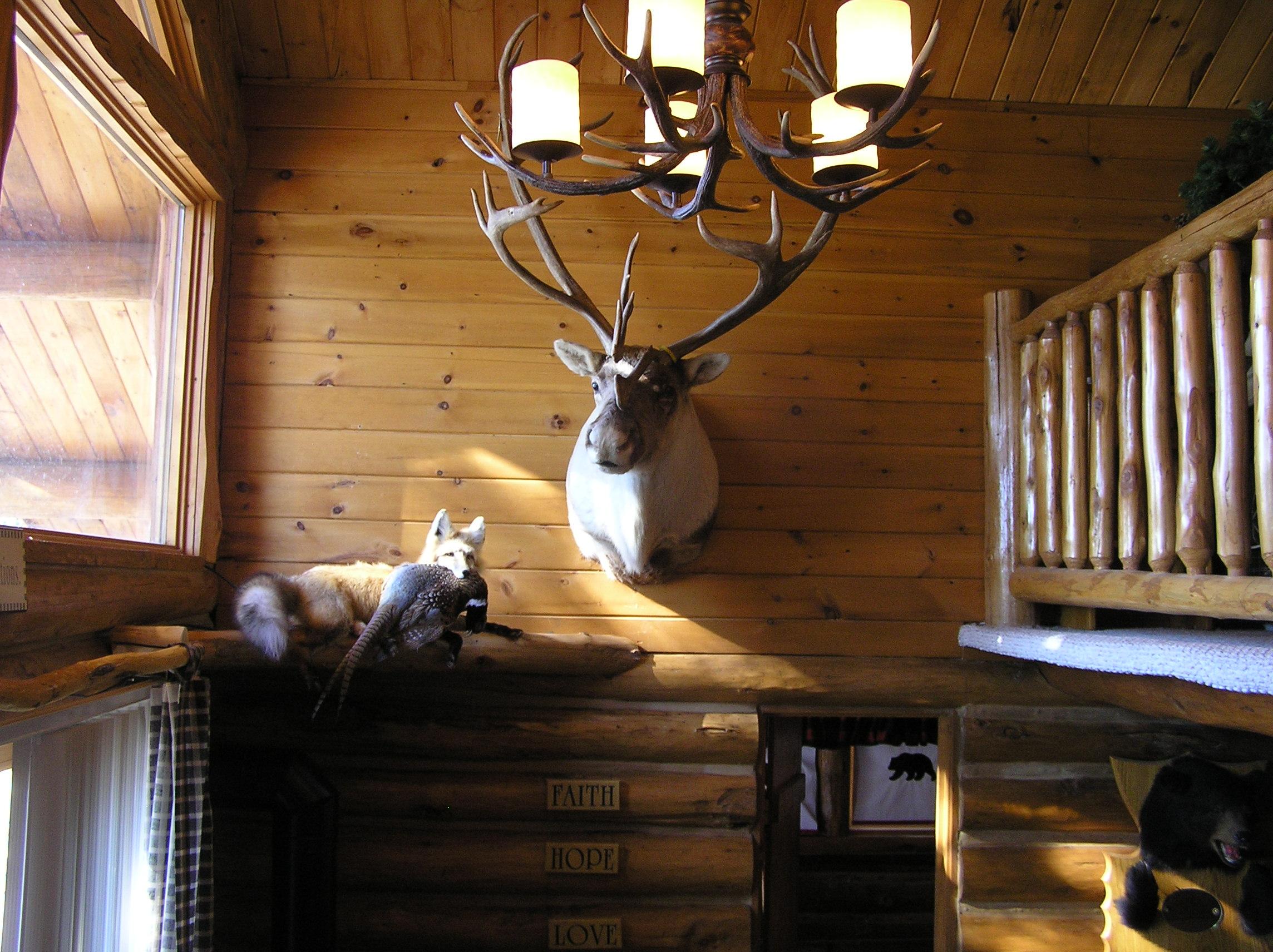 Trophy Caribou Mount in Chalet