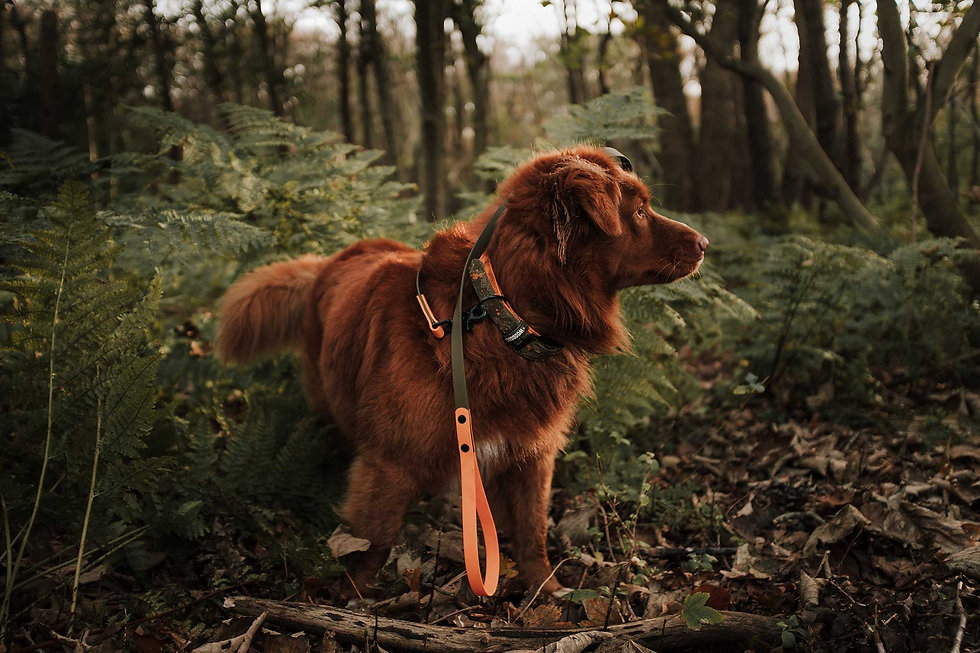 Woodsdog_Hunter_Collection.jpg