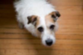 needy dog.jpg