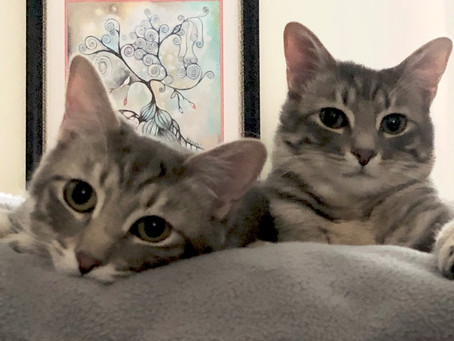 Two Kittens, 152 Spiders & a Book Contract